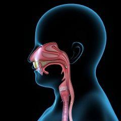 Esophageal Dysphagia: Evaluation And Treatment Options