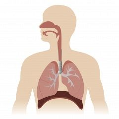 Core Principles For Respiratory Muscle Training (RMT)