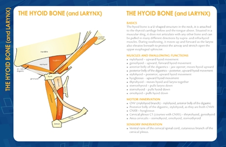 Hyoid Swallow Guide small